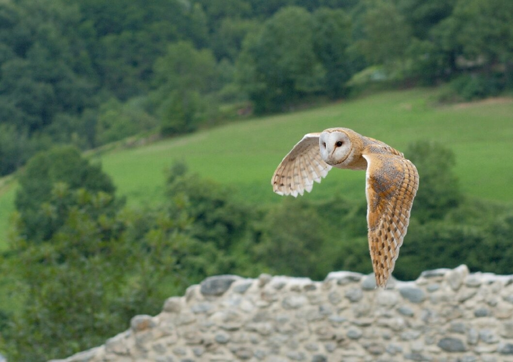 Owl from Art Adventurers